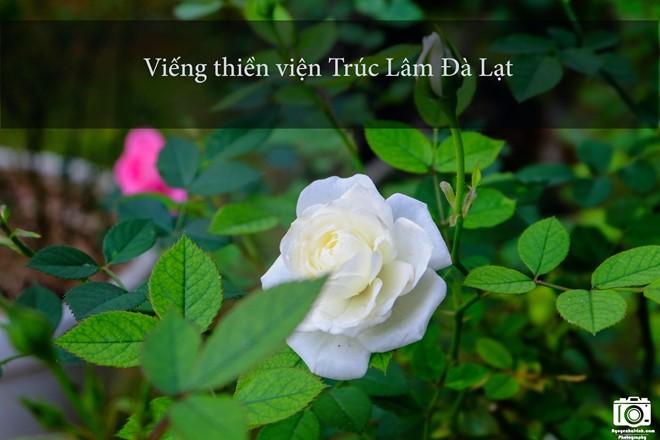 nhung-trai-nghiem-khong-the-bo-qua-dip-304-tai-da-lat-7