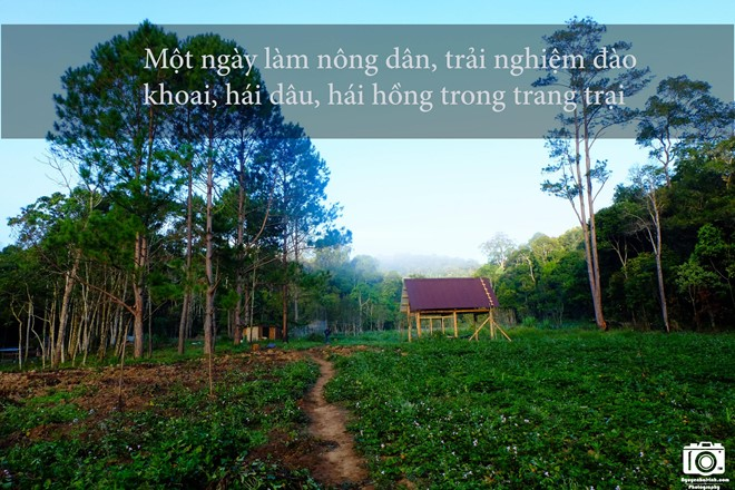 nhung-trai-nghiem-khong-the-bo-qua-dip-304-tai-da-lat-9