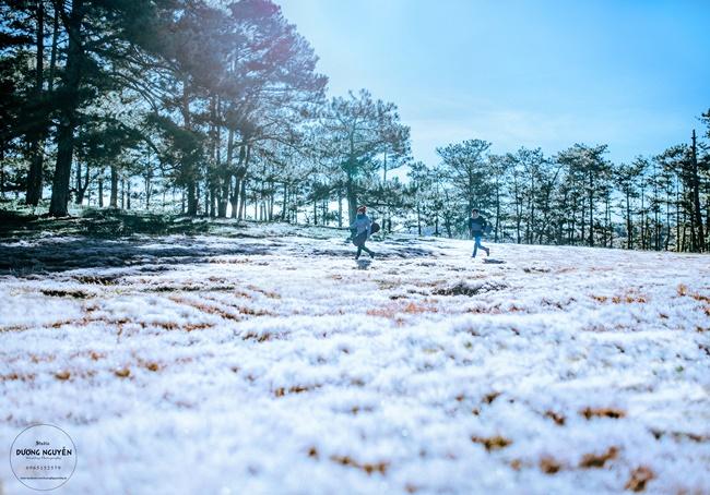 Cánh đồng tuyết đẹp đến ngỡ ngàng ở Đà Lạt