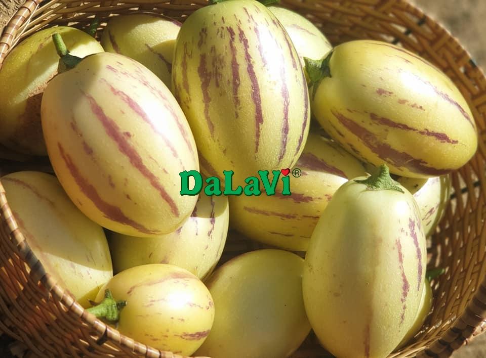 dua-pepino-vang-3