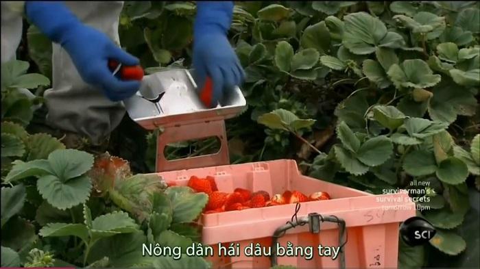 dau-tay-dong-lanh