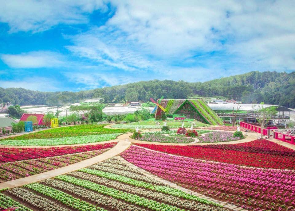 fresh-garden-canh-dong-hoa-moi-ngoai-thanh-da-lat (6)