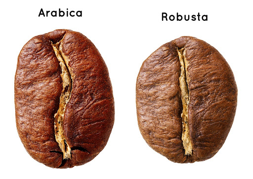 cafe-robusta-arabica