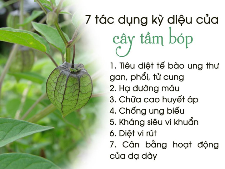 qua-tam-bop (11)