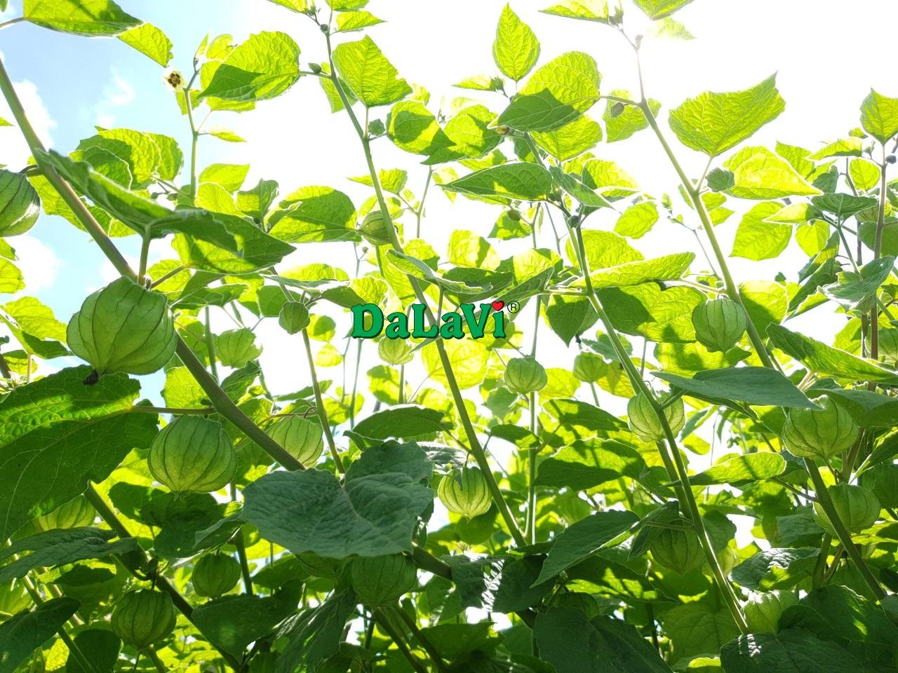 thu-lu-nam-my (3)